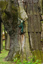 Old figure of Jesus on a tree Royalty Free Stock Photo