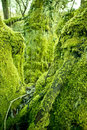 Old Forest Moss Royalty Free Stock Photography