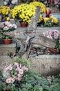 Forgotten grave Royalty Free Stock Photo