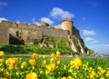 Old fortress and yellow flowers. Stock Photography