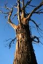 Old gnarled tree Royalty Free Stock Photo