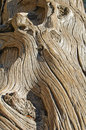 Old gnarled wood Royalty Free Stock Photos