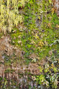 Old green ecological wall background Stock Photography