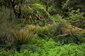Old green forest primeval ground and trunks covered by ferns and lichens Royalty Free Stock Photography