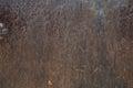 Old grunge rough oxidazed iron surface metal Royalty Free Stock Photo