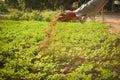 Old hand gardener holding manure Royalty Free Stock Photo
