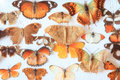 Old home collection of butterflies Royalty Free Stock Images