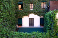 Old house covered by ivy in Paris, France Royalty Free Stock Photo