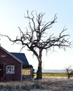 Old house and dead tree abandoned with windows on red walls next to a gnarled Royalty Free Stock Images