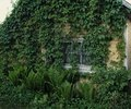 old house window green plants village summer wood wall Royalty Free Stock Photo