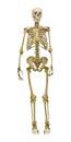 Old human skeleton illustration on white background Royalty Free Stock Photo