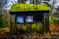 Old hut exterior weathered and abandoned with three windows corrugated moss roof in forrest Royalty Free Stock Photos