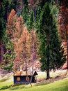 Old hut log cabin at the european alps beehive Stock Photo
