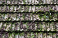 Old hut roof tiles abstract with moss and vegetation Royalty Free Stock Photos