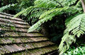 Old hut roof tiles with fern trees abstract moss and vegetation around Royalty Free Stock Photo