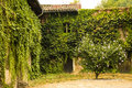 Old ivy-covered house Royalty Free Stock Photo