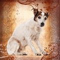 Old Jack Russell Terrier sitting Stock Images