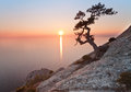 Old juniper tree and sunset over the sea Royalty Free Stock Photos