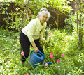 Old lady watering flowers in garden Stock Photography