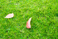 Old leaf on green grass. Stock Photo