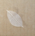 Old leaves on recycle paper background Stock Images