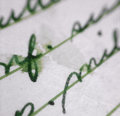 Old letter macro an extreme close up of an handwritten with bleeding ink Stock Photography