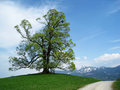 Old linden tree hill mountains Stock Image