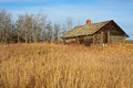 An old log house rotting in a grassy area with aspen trees grain fields in the background Royalty Free Stock Image