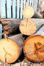 Old logs Stock Images
