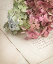 Old love letters and garden flowers hydrangea romantic vintage style background selective focus Stock Photos