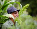 Old man contemplating candid portrait of an expressive senior farmer in hat outdoor in a corn field Stock Images