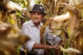 Old man at corn harvest closeup of Royalty Free Stock Photography