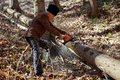Old man cutting trees using a chainsaw Royalty Free Stock Photo