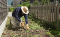 Old man weeder elderly gentleman prying up weeds by the roots on a cool late spring morning and dressed appropriately for the Stock Images