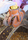 Old manual machine to remove yellow corn from the cob seed matures Stock Images