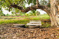 Old marble benches under old tree Stock Photography