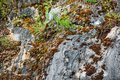 Old marble rock overgrown with green vegetation and red moss is close Royalty Free Stock Photo