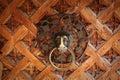 Old metal door knocker,  lion head Royalty Free Stock Photo