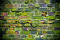 Old mossy wall in the jungle Stock Image