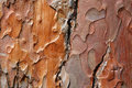 Old oak bark Royalty Free Stock Photo