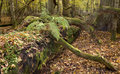 Old oak lying with fern on top Stock Photos