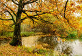 Old oak tree over a pond Royalty Free Stock Photo