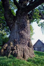 Old oak trunk and house Royalty Free Stock Photos