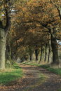 Old oaks of the reinhard forest in germany Stock Images