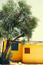 Old olive tree near the house mediterranean background Royalty Free Stock Photos