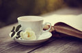 Old open book and a cup with a white wild rose Royalty Free Stock Photo