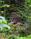 Old overgrown fireplace abandoned in the adirondack wilderness Stock Photos