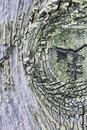 old paint green moss wood texture macro close up abstract background Royalty Free Stock Photo