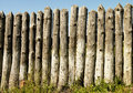 Old paling of sharpened logs on sky background Stock Photos
