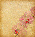 Old paper with orchid worn Royalty Free Stock Image